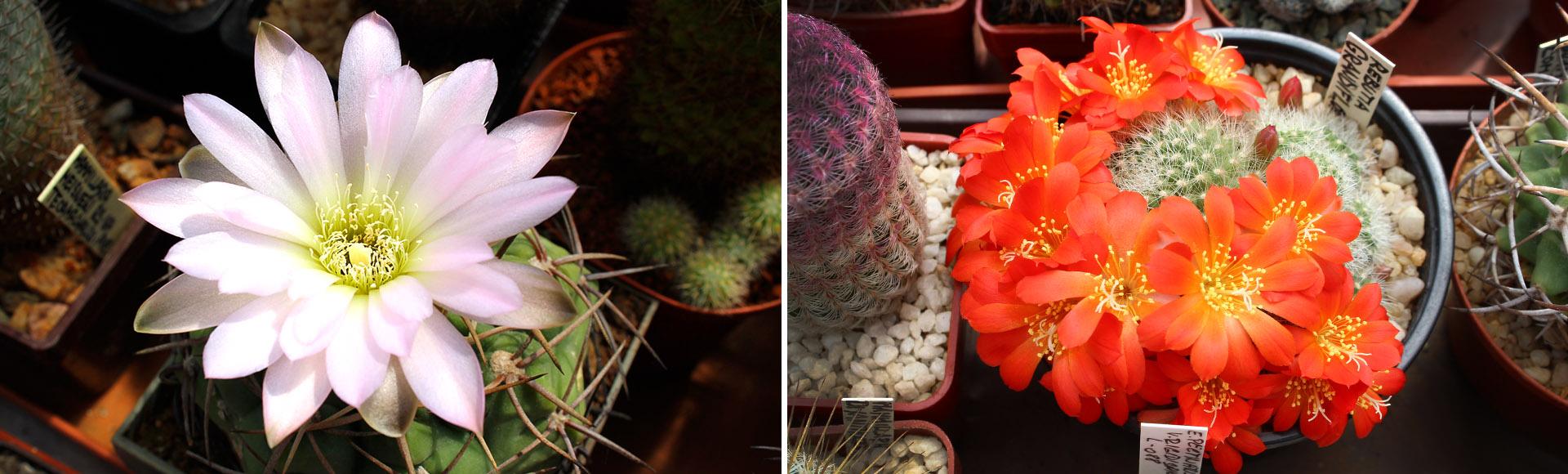 """""""Jistou cestou k úspěšnému výsevu kaktusů"""""""